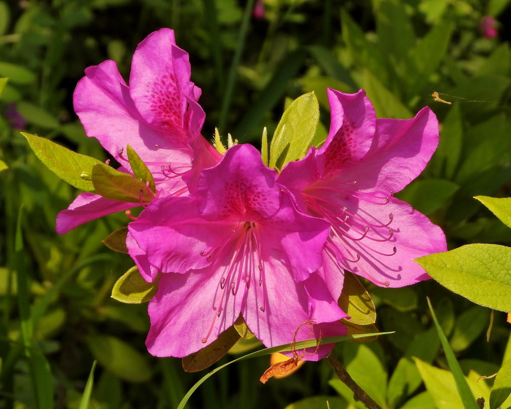 木の花と帰化植物_c0305565_17413795.jpg