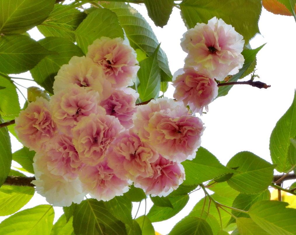 木の花と帰化植物_c0305565_17415933.jpg