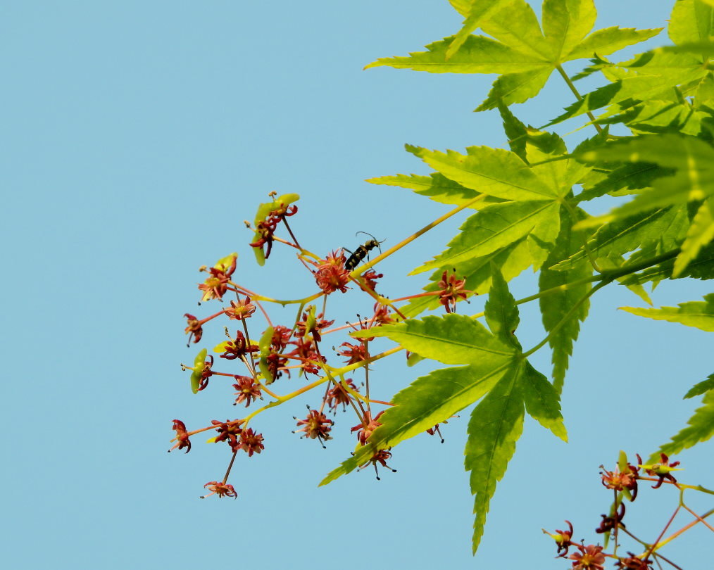 木の花と帰化植物_c0305565_17421851.jpg
