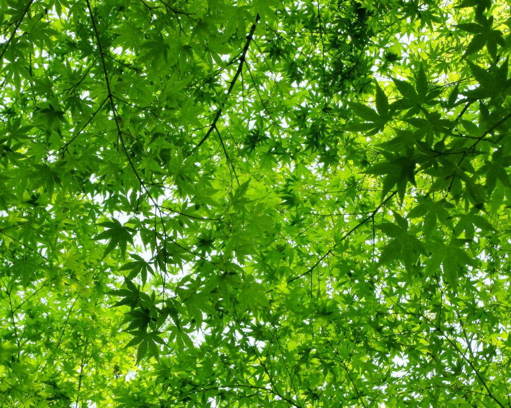 木の花と帰化植物_c0305565_17423122.jpg