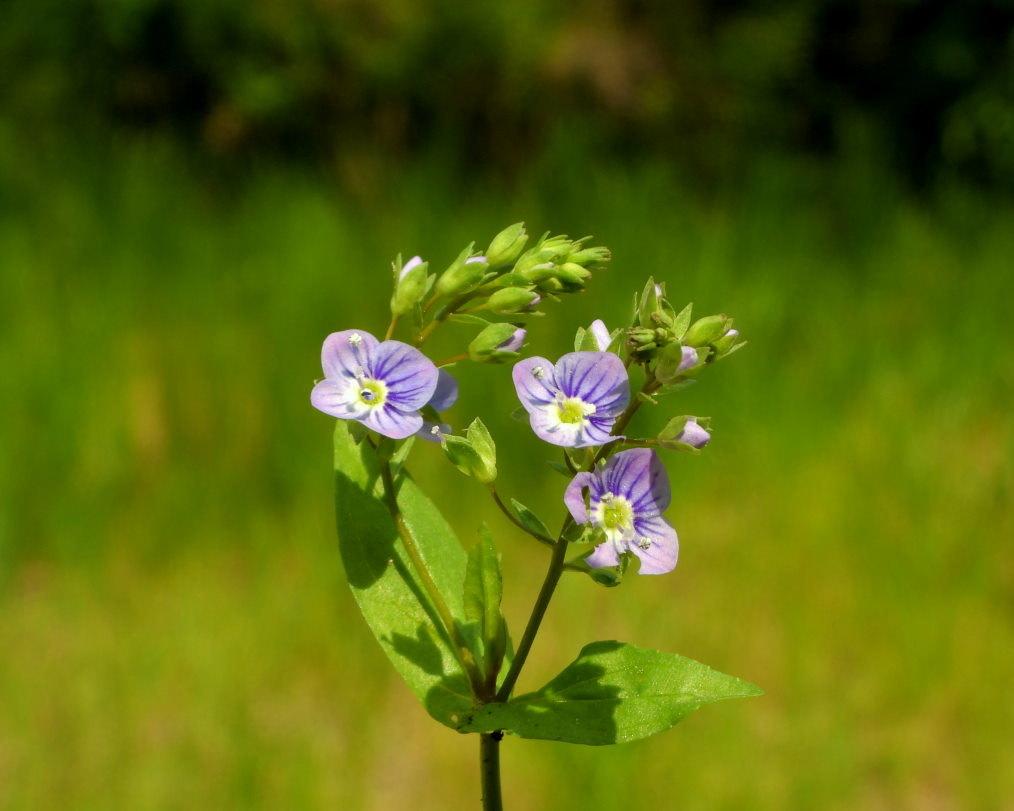 木の花と帰化植物_c0305565_17430609.jpg
