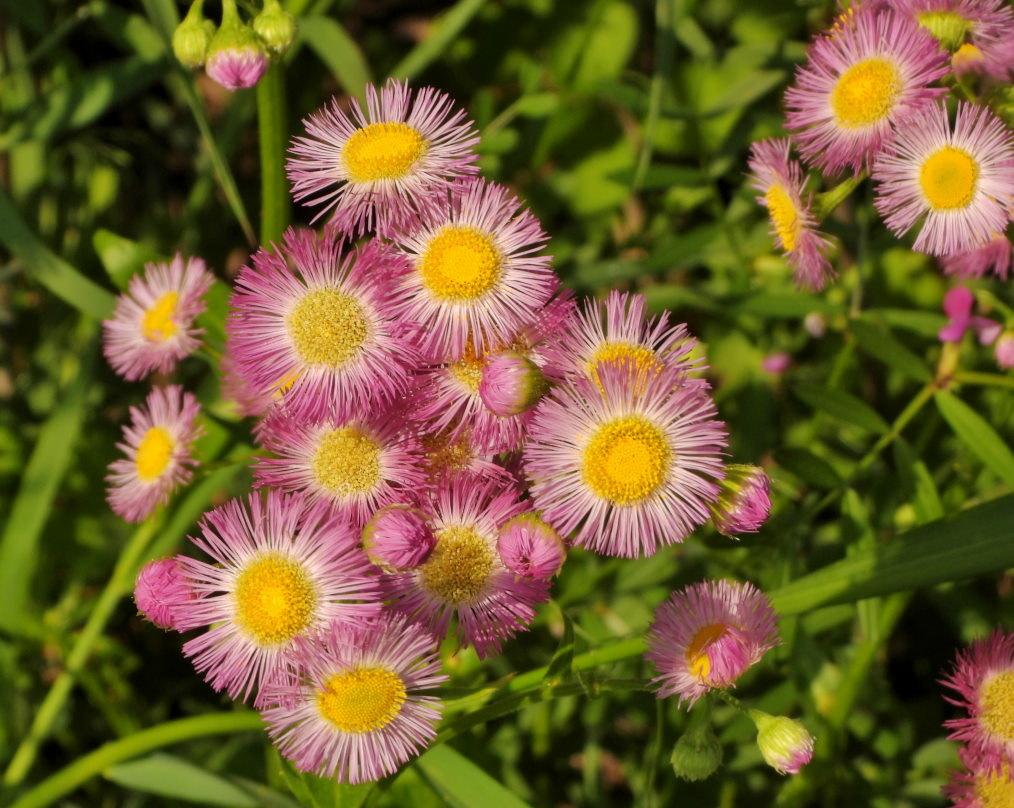 木の花と帰化植物_c0305565_17435199.jpg