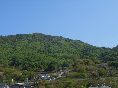 新緑の行者山、麓を彩る桐の花_e0175370_21093608.jpg