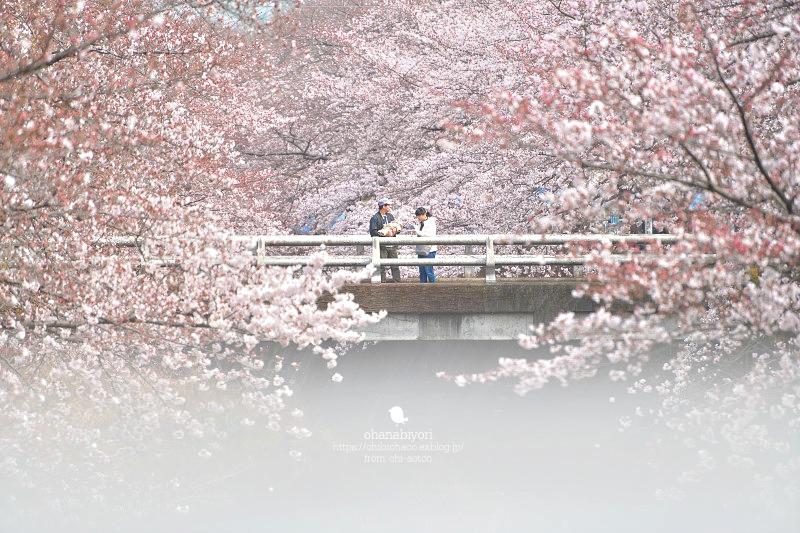 私の桜 ♡ 小さくて大きいね_c0319774_23215267.jpg