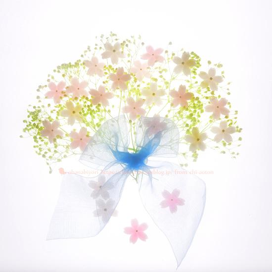 私の桜 ♡ 小さくて大きいね_c0319774_23411756.jpg