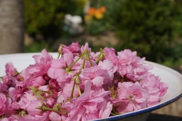 桜の花の塩漬け_e0365880_19124324.jpg