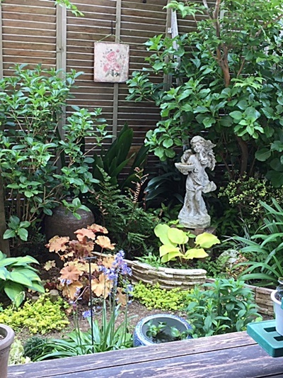 小さな庭&アカシダの新芽と志村けんさん_d0046702_14374132.jpg