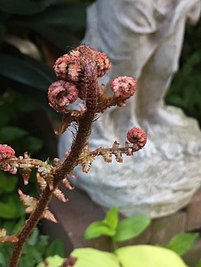 小さな庭&アカシダの新芽と志村けんさん_d0046702_14385687.jpg