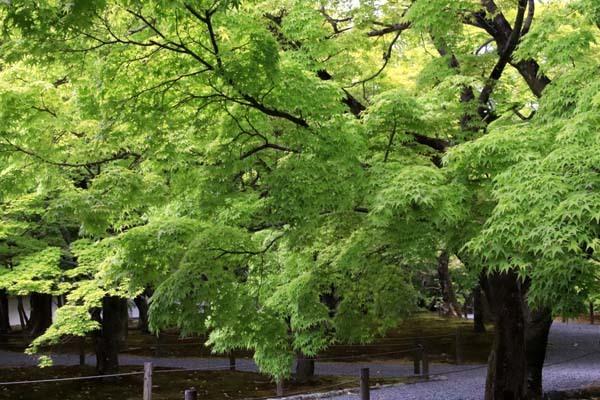 東福寺 法堂‣三門など_e0048413_15573579.jpg