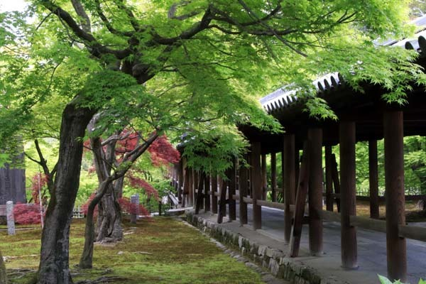 東福寺 法堂‣三門など_e0048413_15574027.jpg