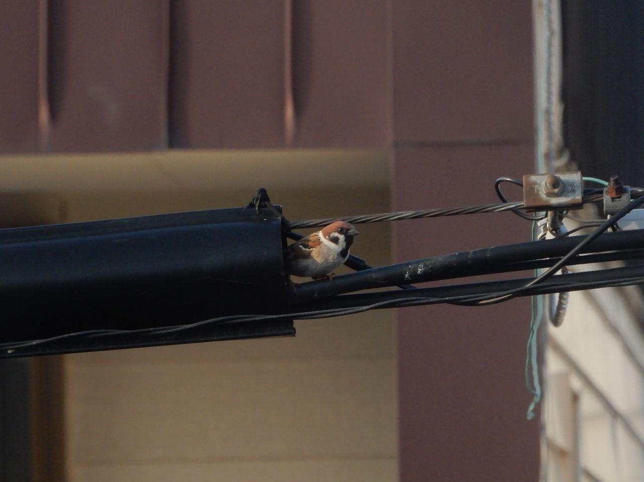 メダカは外へ、スズメは巣作り_c0025115_22432132.jpg