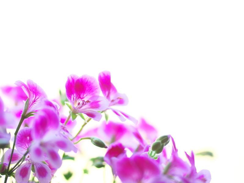 flowers_e0169421_21475308.jpg