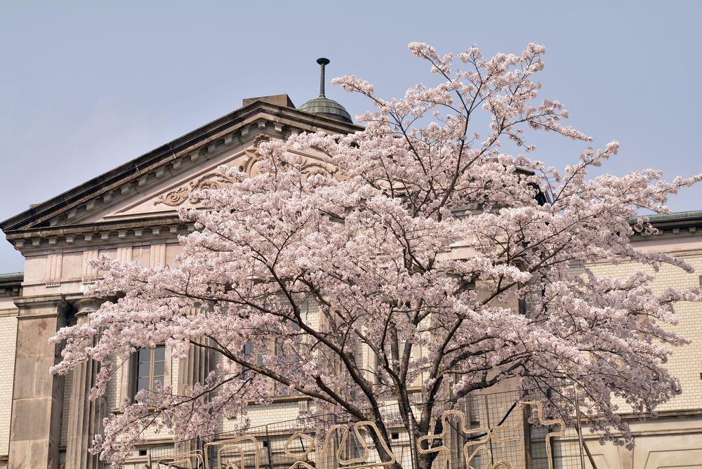 内閣文庫と桜_e0373930_10572689.jpg