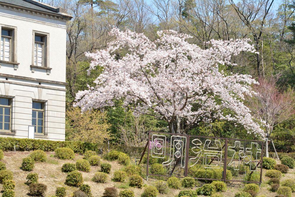 内閣文庫と桜_e0373930_10572799.jpg