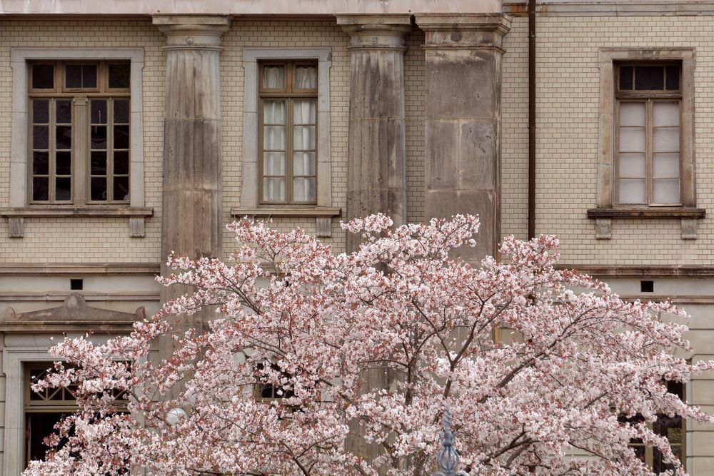 内閣文庫と桜_e0373930_11041387.jpg