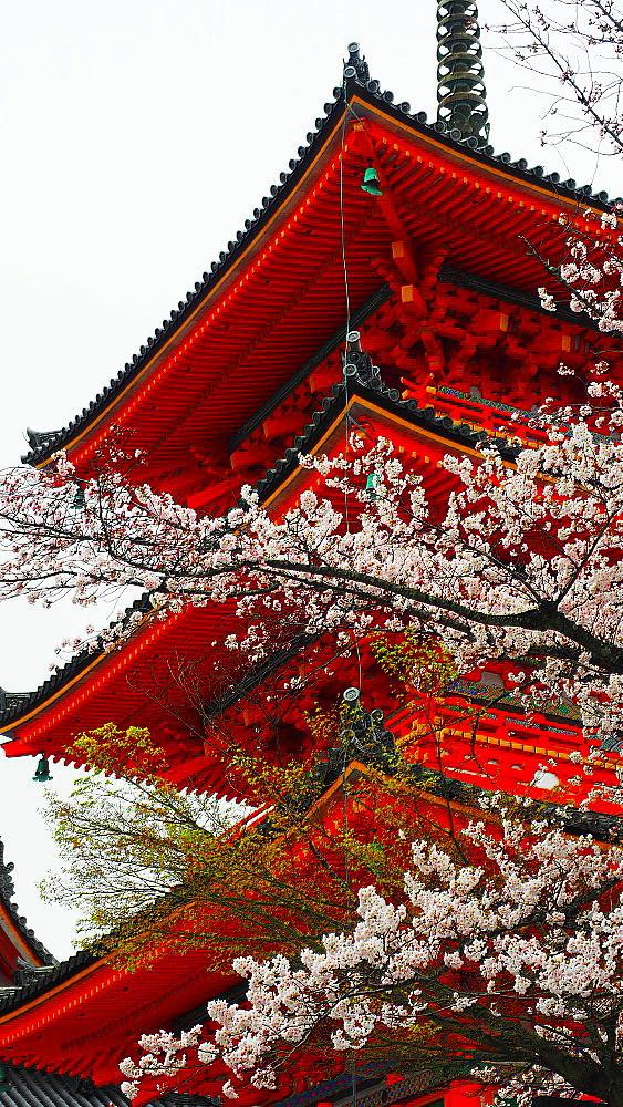 清水寺 桜_a0287533_21413588.jpg