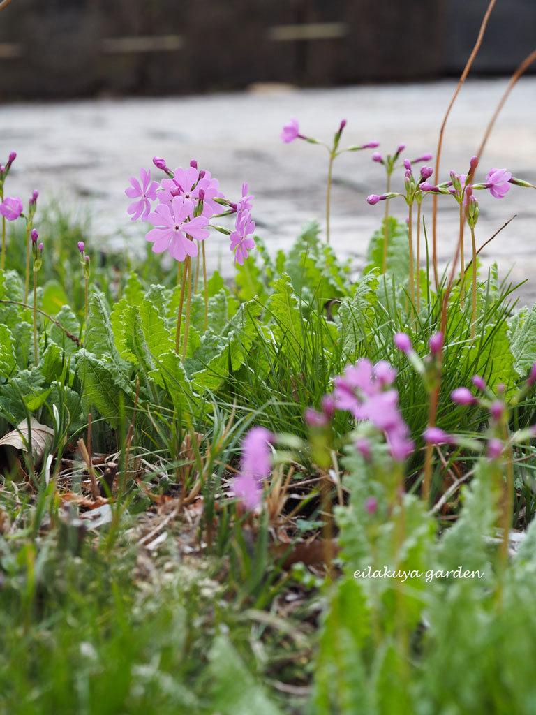 静かな 静かな 春_b0133243_22072615.jpg