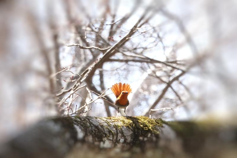 自粛中・・・こんな小鳥に癒やされます。_a0324247_19411746.jpg