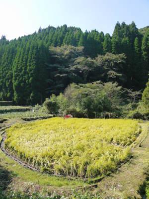 米作りの挑戦(2020年) 昨年より1週間早く苗床を作りました!(前編:温湯消毒から苗床完成まで)_a0254656_17441715.jpg