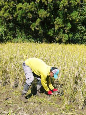 米作りの挑戦(2020年) 昨年より1週間早く苗床を作りました!(前編:温湯消毒から苗床完成まで)_a0254656_18124852.jpg