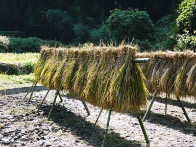 米作りの挑戦(2020年) 昨年より1週間早く苗床を作りました!(前編:温湯消毒から苗床完成まで)_a0254656_18190779.jpg