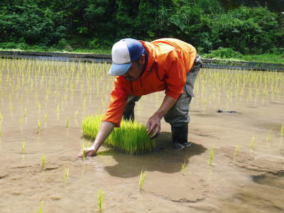 米作りの挑戦(2020年) 昨年より1週間早く苗床を作りました!(前編:温湯消毒から苗床完成まで)_a0254656_18210819.jpg