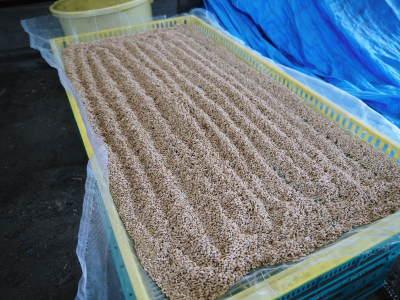 米作りの挑戦(2020年) 昨年より1週間早く苗床を作りました!(前編:温湯消毒から苗床完成まで)_a0254656_18272803.jpg