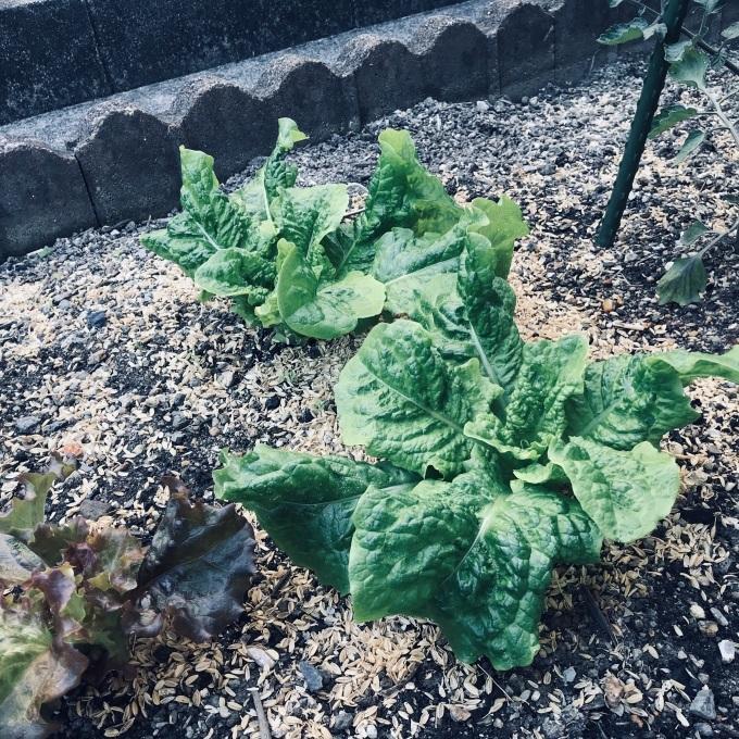 山東菜が主役のお味噌汁_b0100062_18195802.jpeg