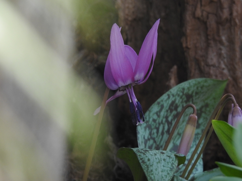 庭の草花(4回目)_d0391670_22145992.jpg
