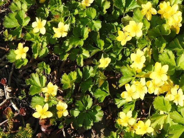 庭の草花(4回目)_d0391670_22195613.jpg