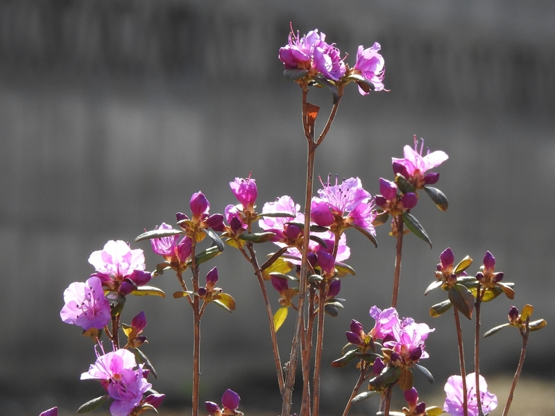 庭の草花(4回目)_d0391670_22202302.jpg
