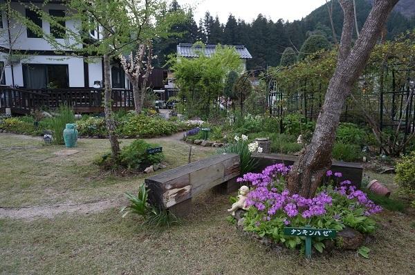 夕方のお庭_e0365880_21411306.jpg