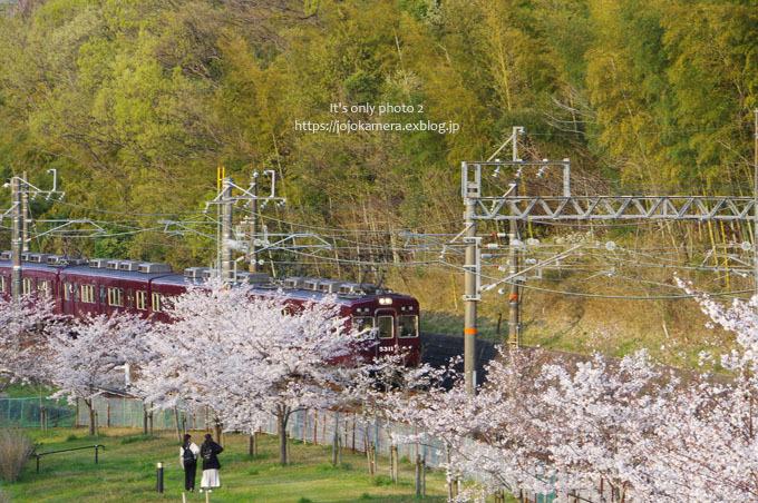 私の桜 2020 -電車と桜-_b0391986_18574999.jpg