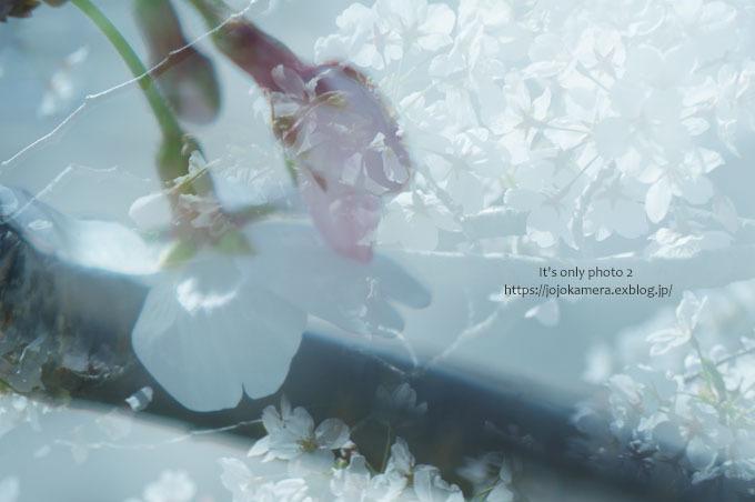 私の桜 2020  -マクロ de 桜-_b0391986_22145271.jpg