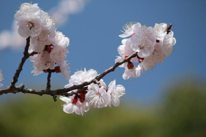 私の桜 2020_b0324291_18111066.jpg