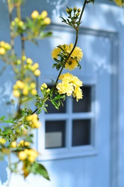 春の庭 2020 その2_d0025294_17244677.jpg