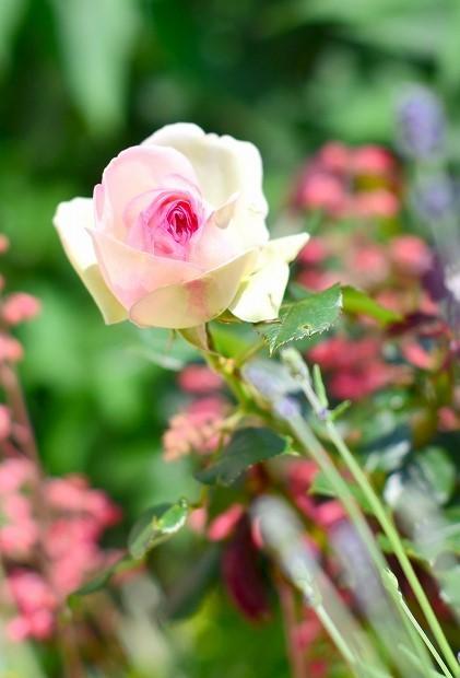 春の庭 2020 その2_d0025294_17262754.jpg