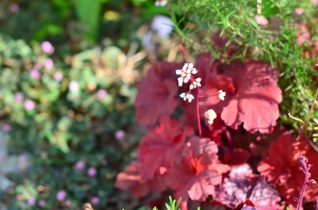 春の庭 2020 その2_d0025294_17292721.jpg
