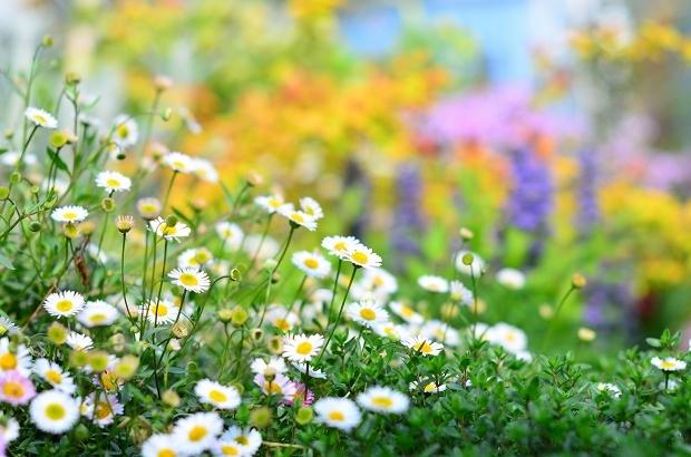 春の庭 2020 その2_d0025294_17295821.jpg