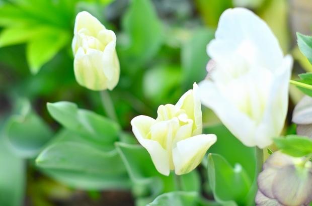 春の庭 2020 その2_d0025294_17304930.jpg