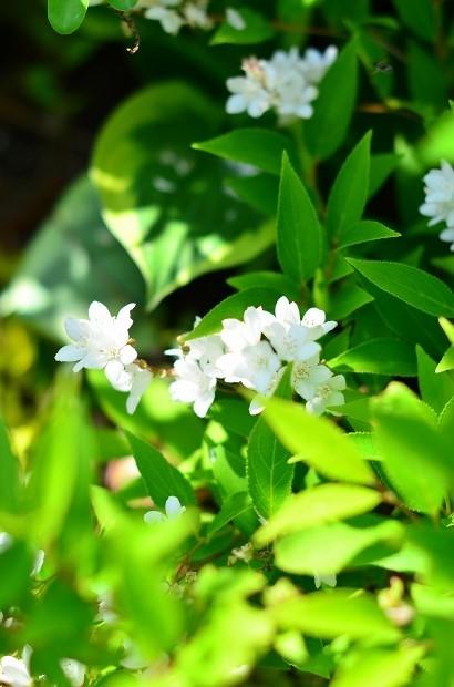 春の庭 2020 その2_d0025294_17311947.jpg