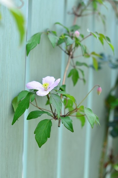 春の庭 2020 その2_d0025294_17345878.jpg