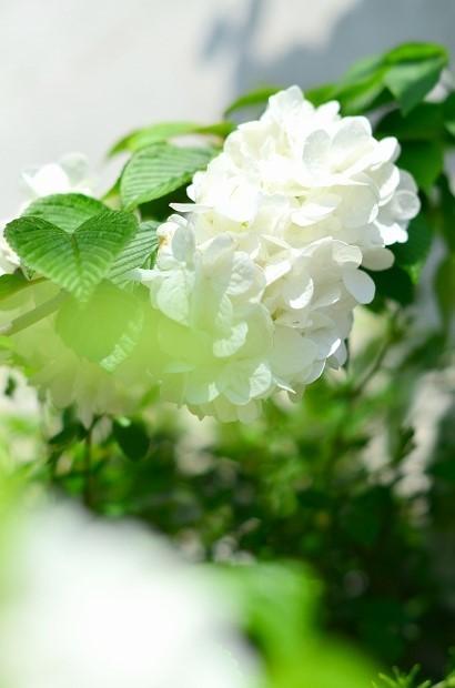 春の庭 2020 その2_d0025294_17355038.jpg