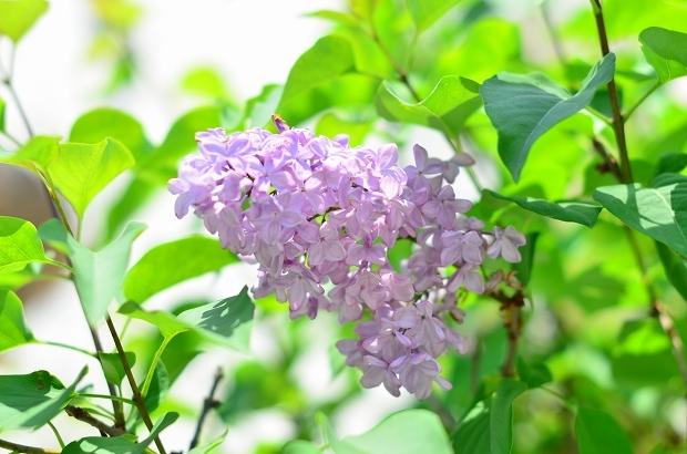 春の庭 2020 その2_d0025294_17361365.jpg