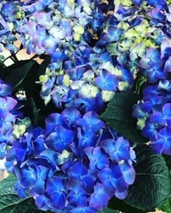 美しい花の癒し_f0061394_08571850.jpg