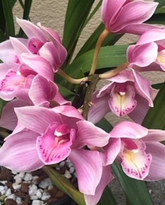 美しい花の癒し_f0061394_08590792.jpg