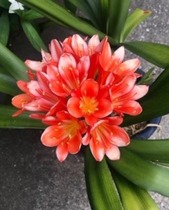 美しい花の癒し_f0061394_08593529.jpg