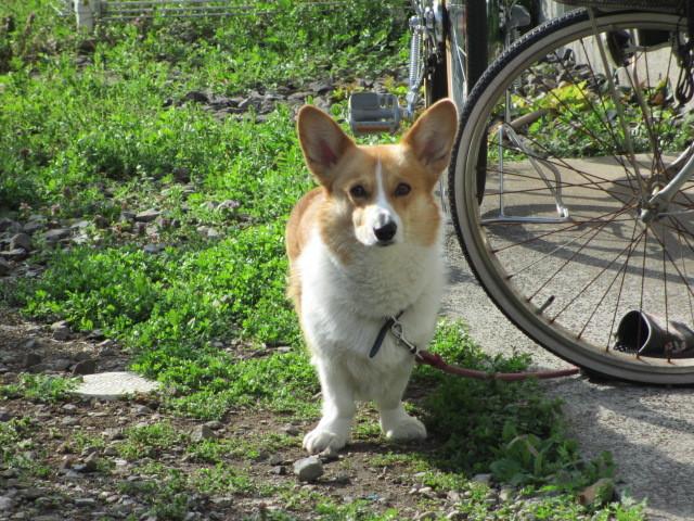 犬鼻マスク_b0203907_09050811.jpg