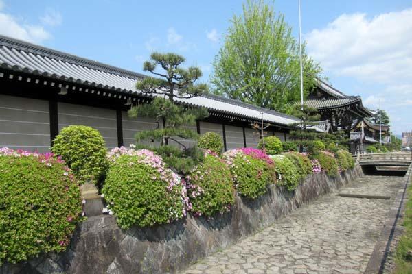 西本願寺 ツツジ終盤_e0048413_20035309.jpg
