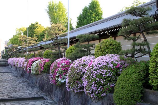 西本願寺 ツツジ終盤_e0048413_20480095.jpg